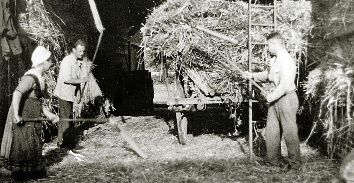 Dreschen mit Dreschflegeln in einer Scheune in Hachborn, um 1920