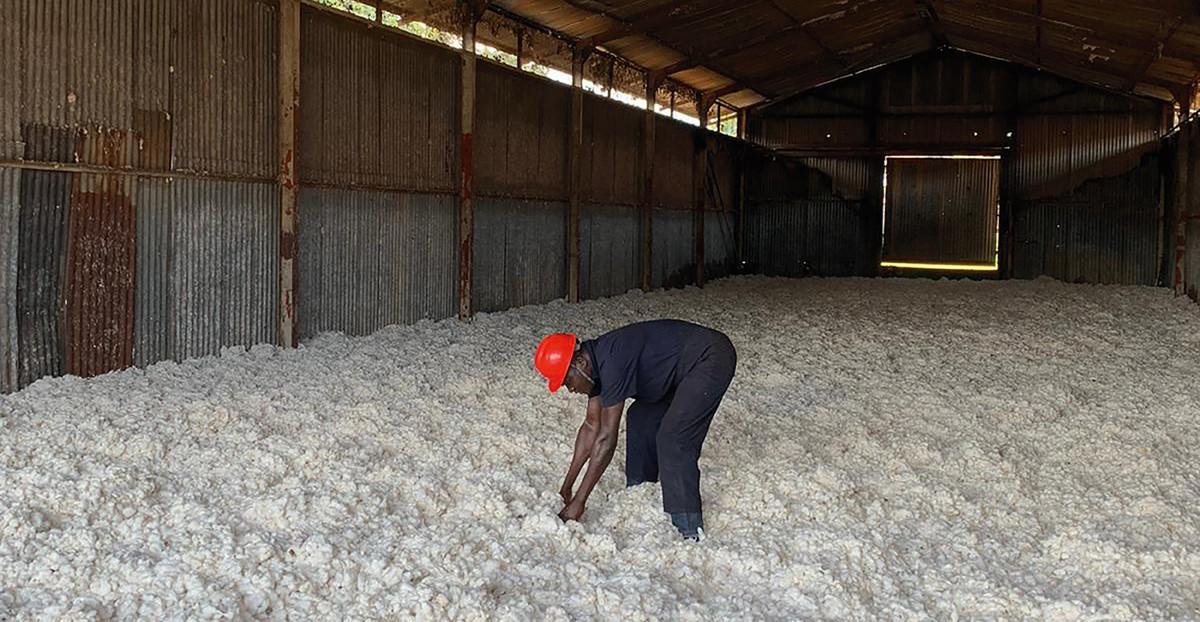 Baumwollernter Lagerhalle Uganda